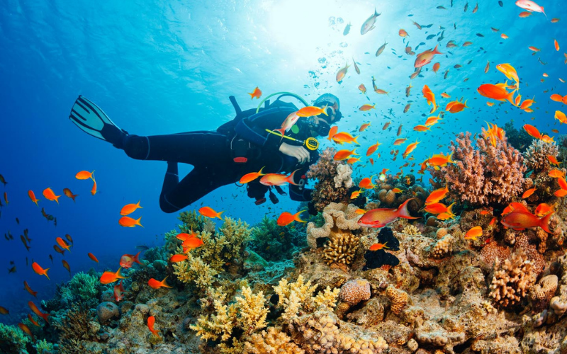 Marine Biologist Job Description